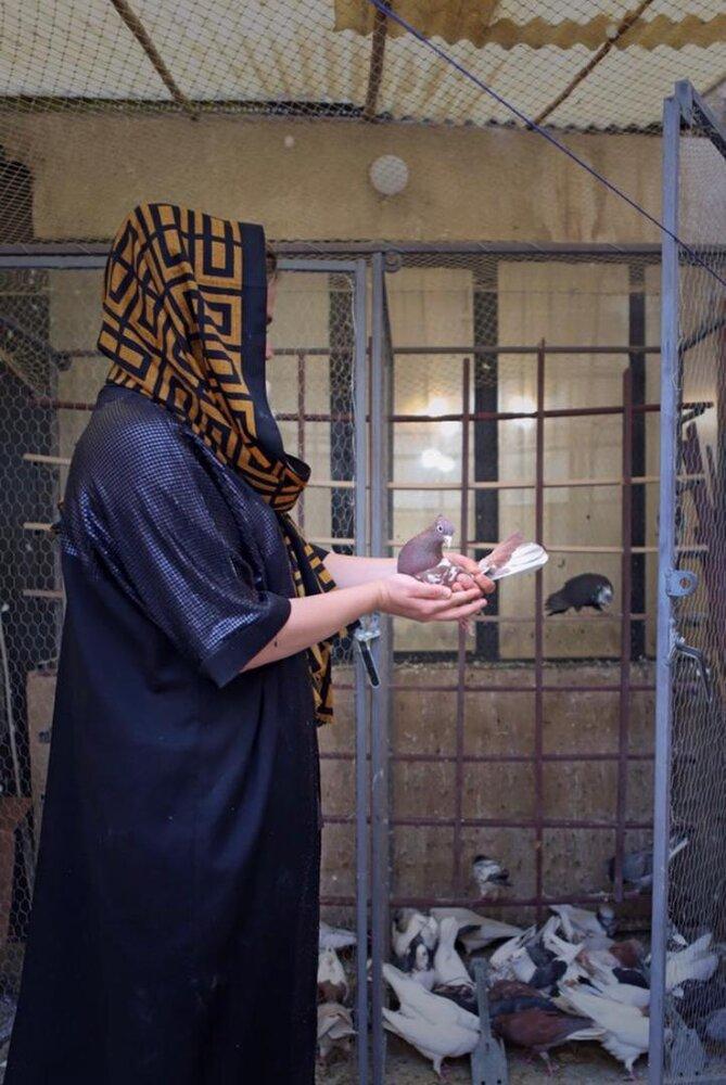 گزارشی از زنان «عشقباز»؛ حکایت زنانی که برای نخستینبار در مسابقات کبوترپرانی شرکت کردهاند
