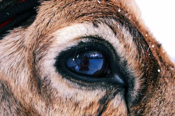 amazing animal abilities