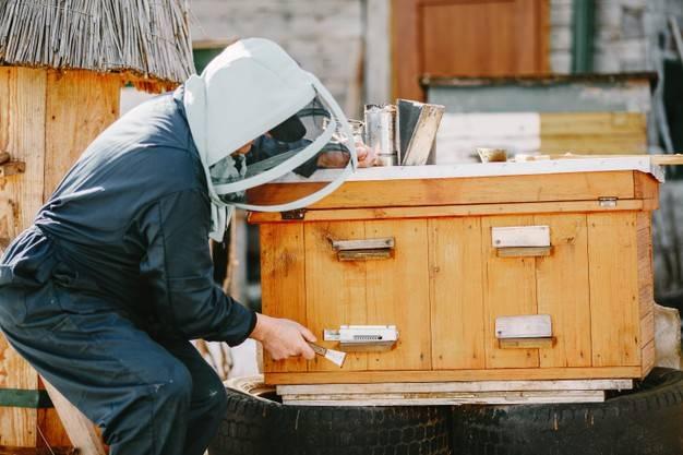 زنبورهای عسل در اقتصاد