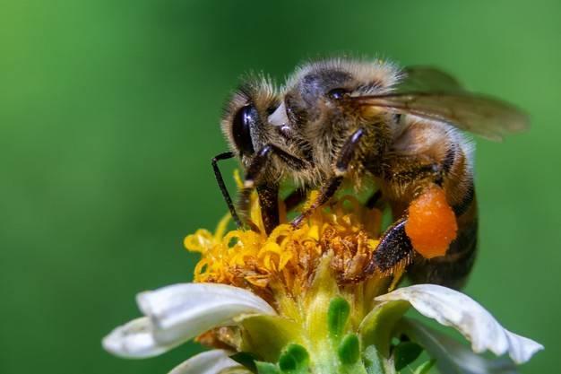 دنیا بدون زنبور عسل چگونه خواهد بود ؟