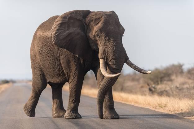 نجات فیل ها