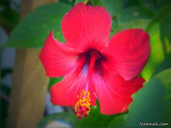 نگهداری گل ها