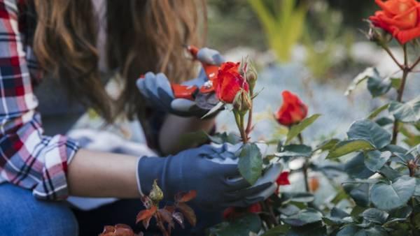 زمان و نحوه هرس کردن گیاهان آپارتمانی