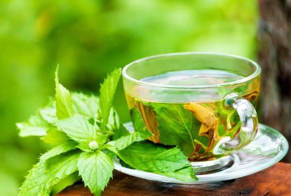 چای پونه