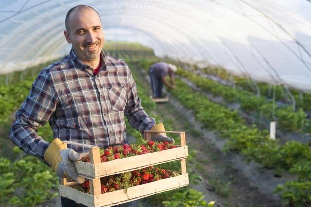 کارگران مزرعه