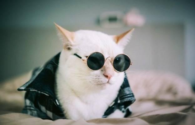 گربه پولدار