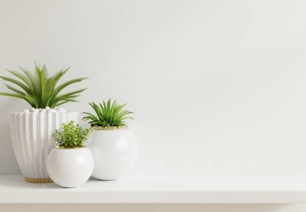 راز اصلی مراقبت از گل و گیاهان آپارتمانی