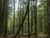 این جنگل ، محل خودکشی است !!